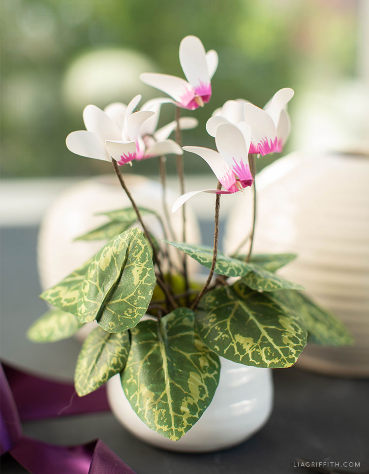 frosted paper cyclamen plant in front of window next to empty vases