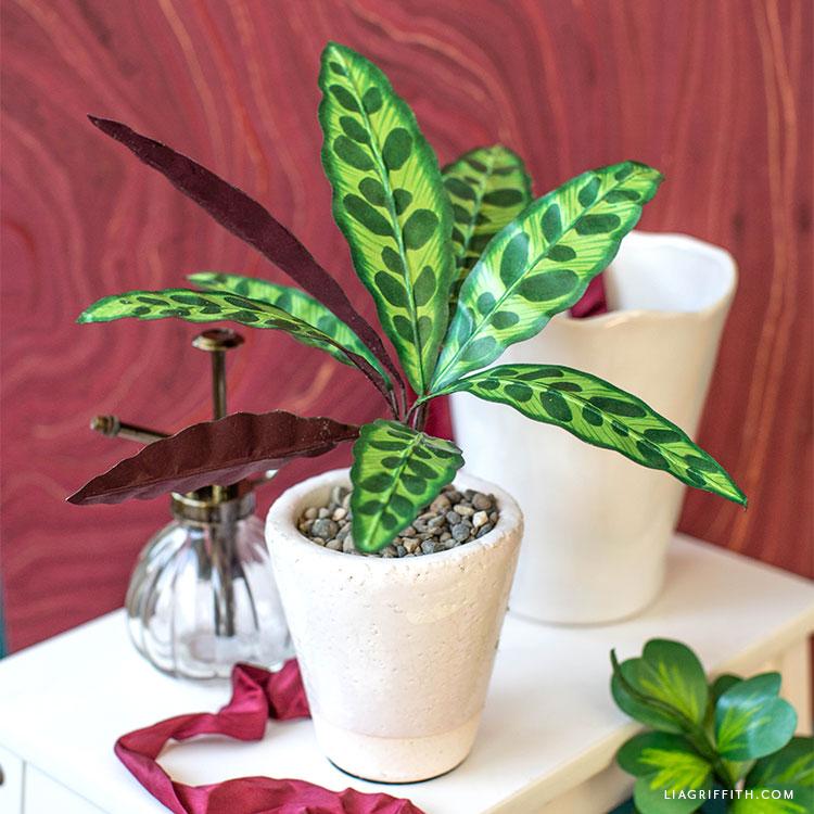 potted paper rattlesnake plant next to empty vase