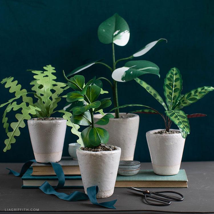 four paper plants: zig-zag cactus, hoya kerrii, white knight philodendron, and rattlesnake plant