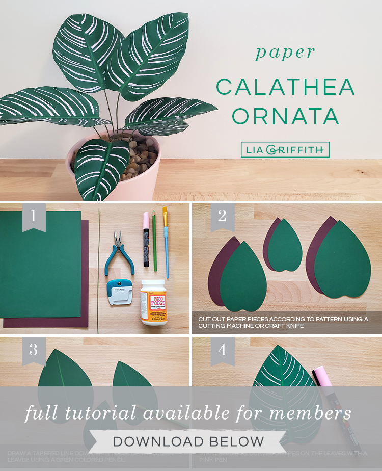 DIY step by step photo tutorial for paper calathea ornata plant by Lia Griffith