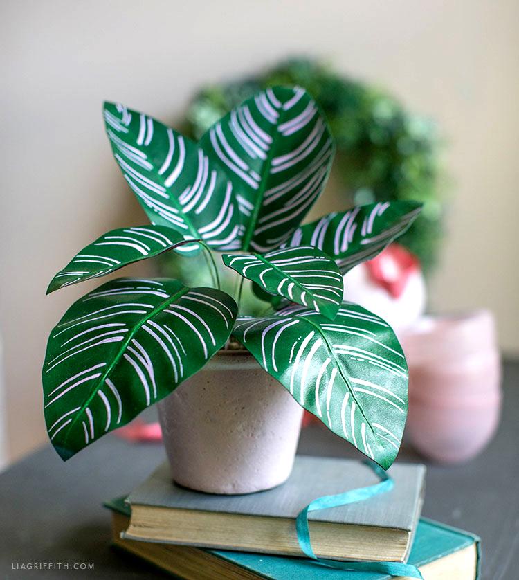 paper calathea ornata plant on top of book