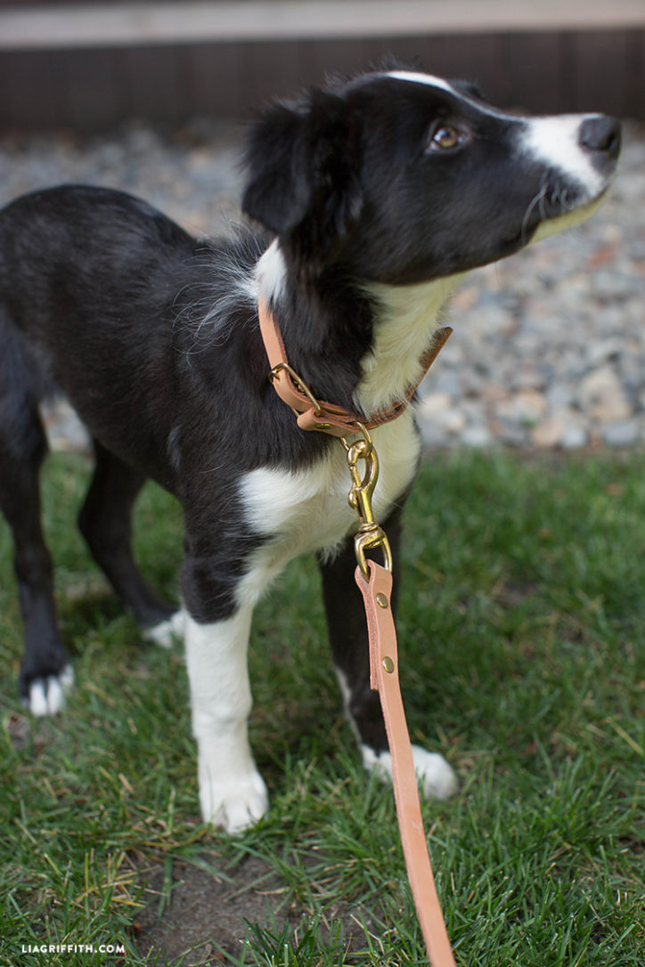 DIY dog collar leash