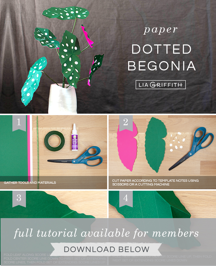 DIY photo tutorial for begonia maculata by Lia Griffith