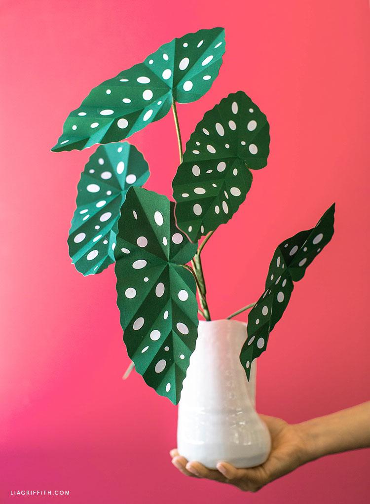 handcrafted begonia maculata