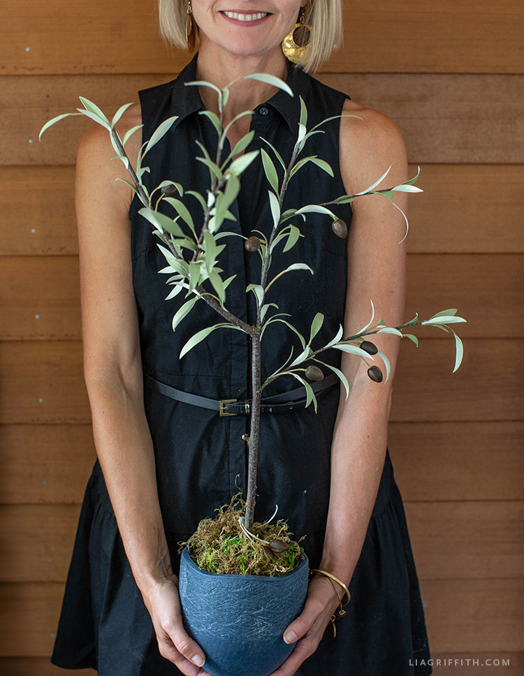 potted paper olive tree