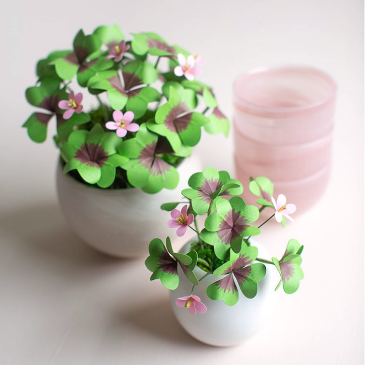 paper lucky clover plants