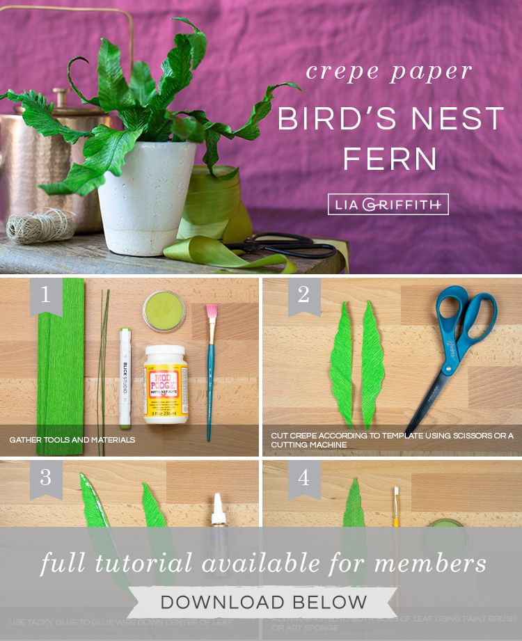 Photo tutorial for crepe paper bird's nest fern by Lia Griffith