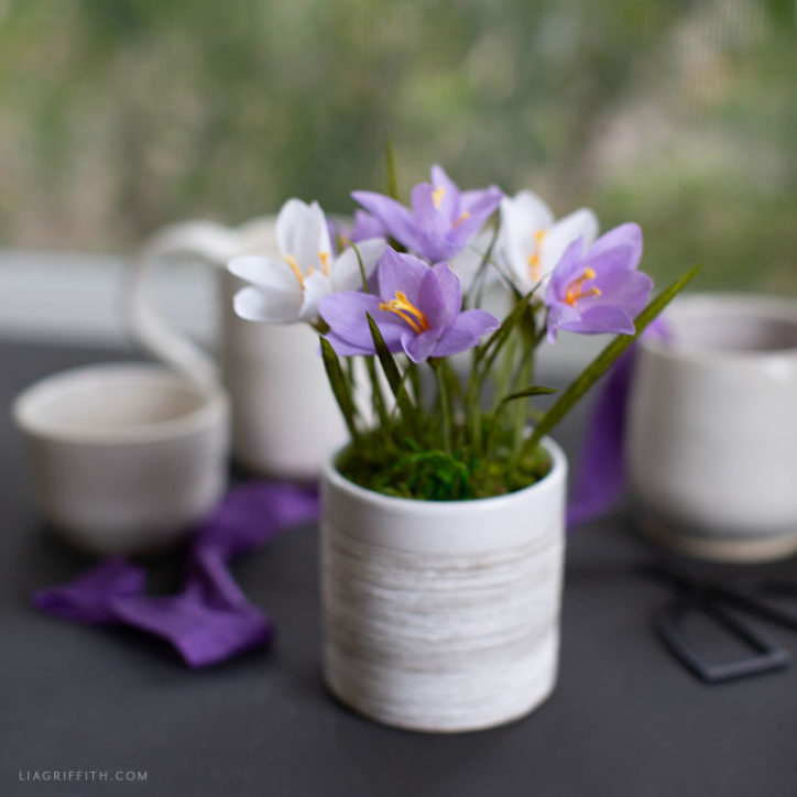 crepe paper crocus plant