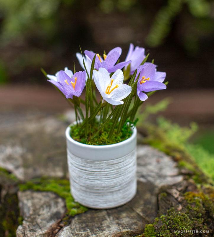 DIY crepe paper crocus plant