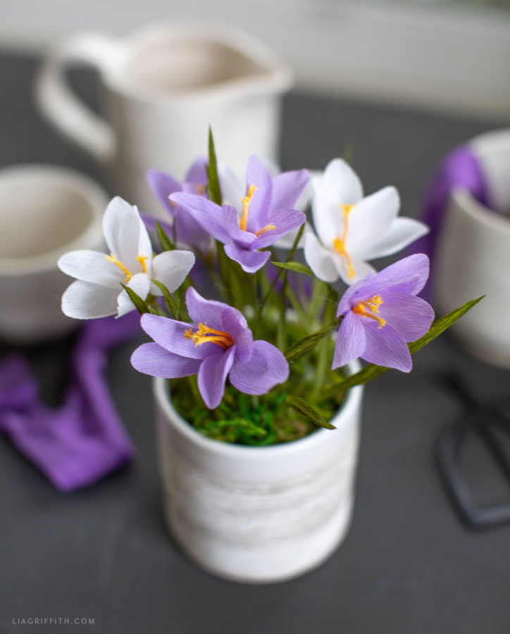 DIY crocus blooms