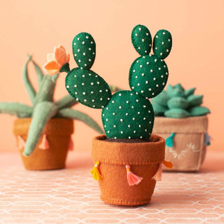 felt bunny ear cactus, aloe vera plant, and echeveria