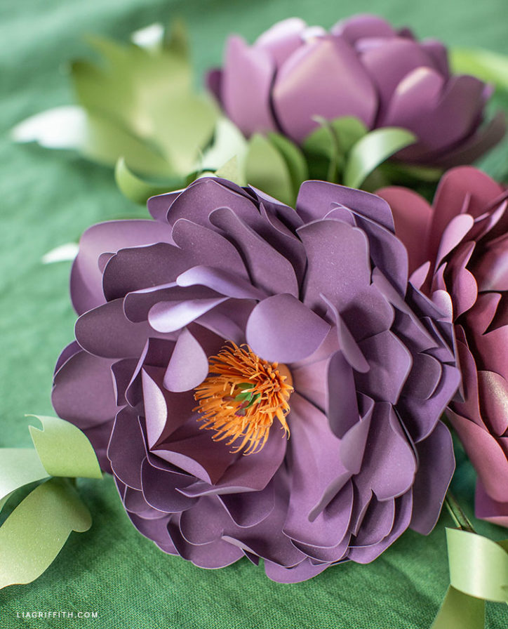 purple frosted paper heirloom peony