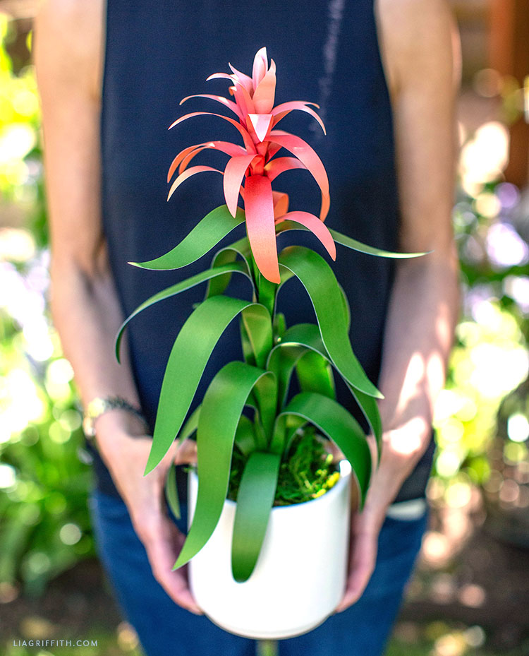 DIY frosted paper guzmania potted plant