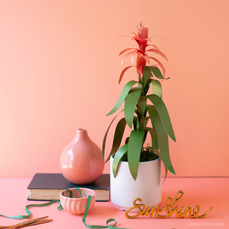 frosted paper guzmania plant