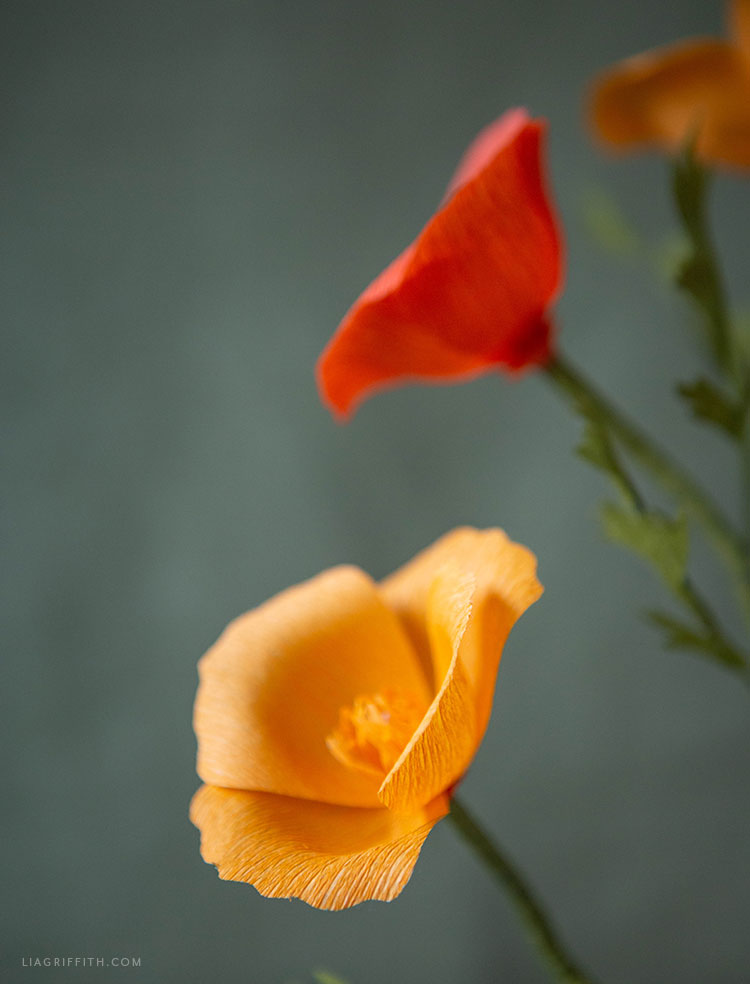 extra fine crepe paper California poppies