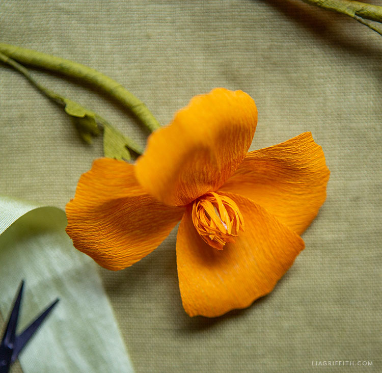 orange crepe paper California poppy