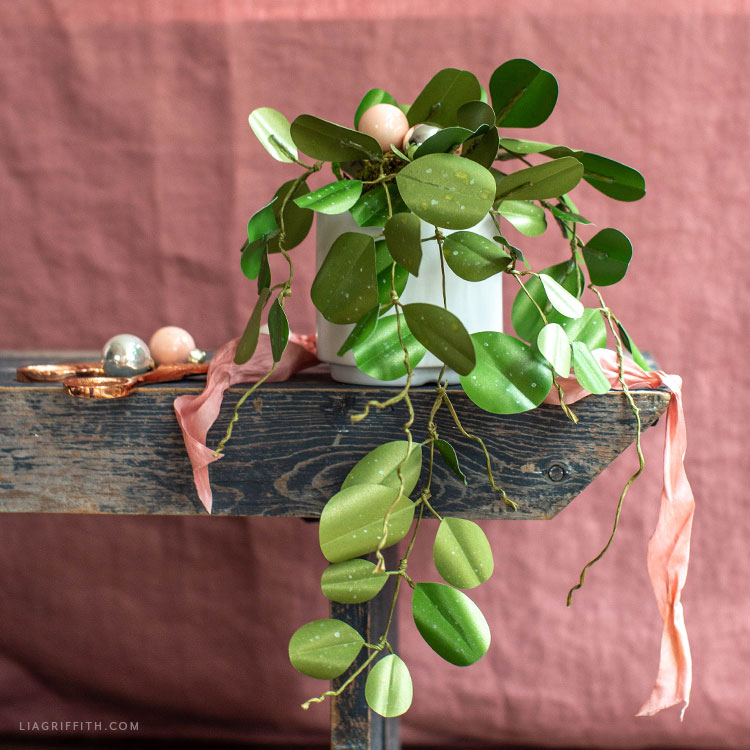 frosted paper Hoya Obovata plant