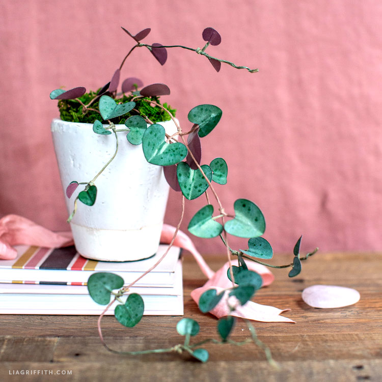 paper trailing plant