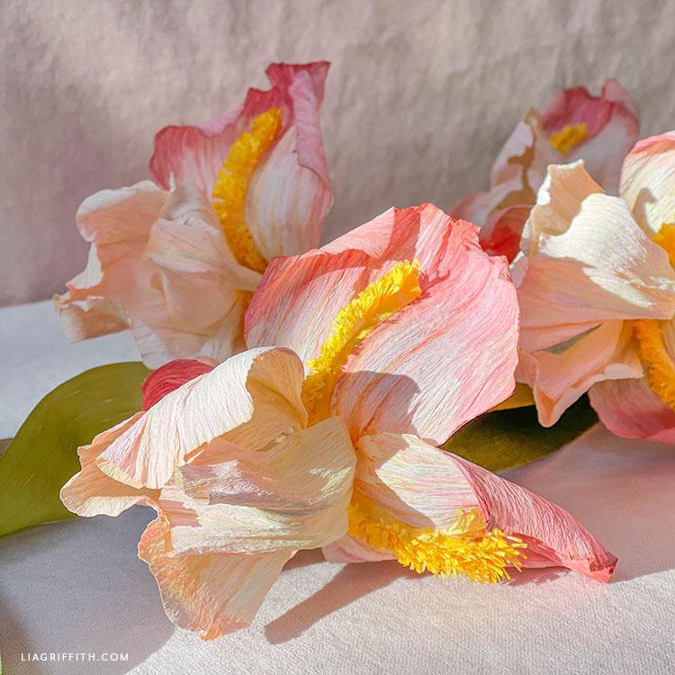 crepe paper bearded iris