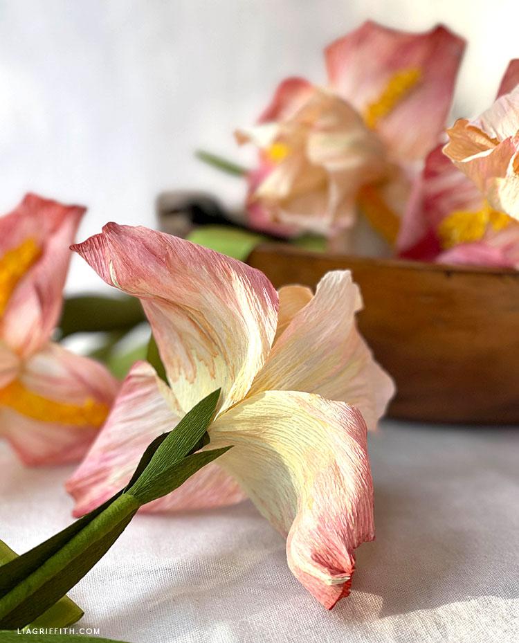 underside of crepe paper bearded iris