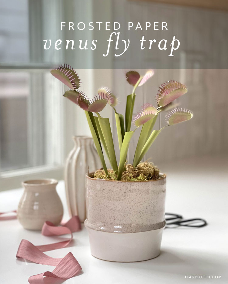 frosted paper venus fly trap