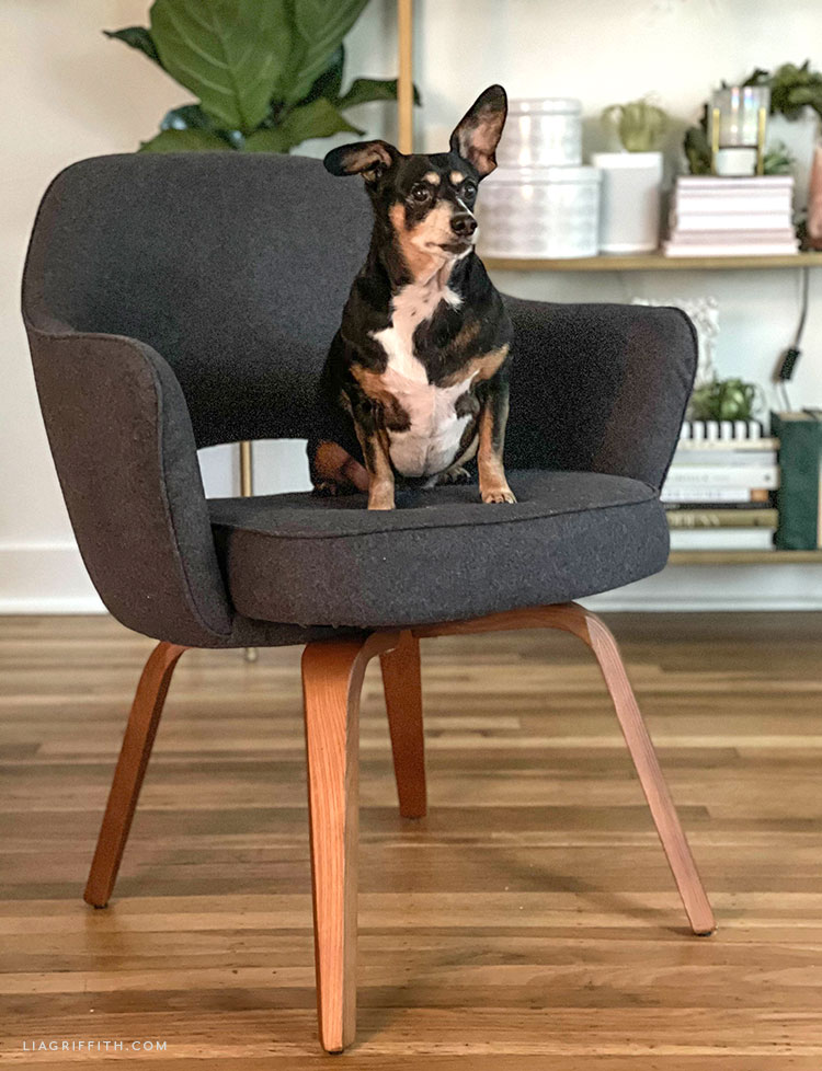 Eternity Modern Saarinen Executive Armchair with dog