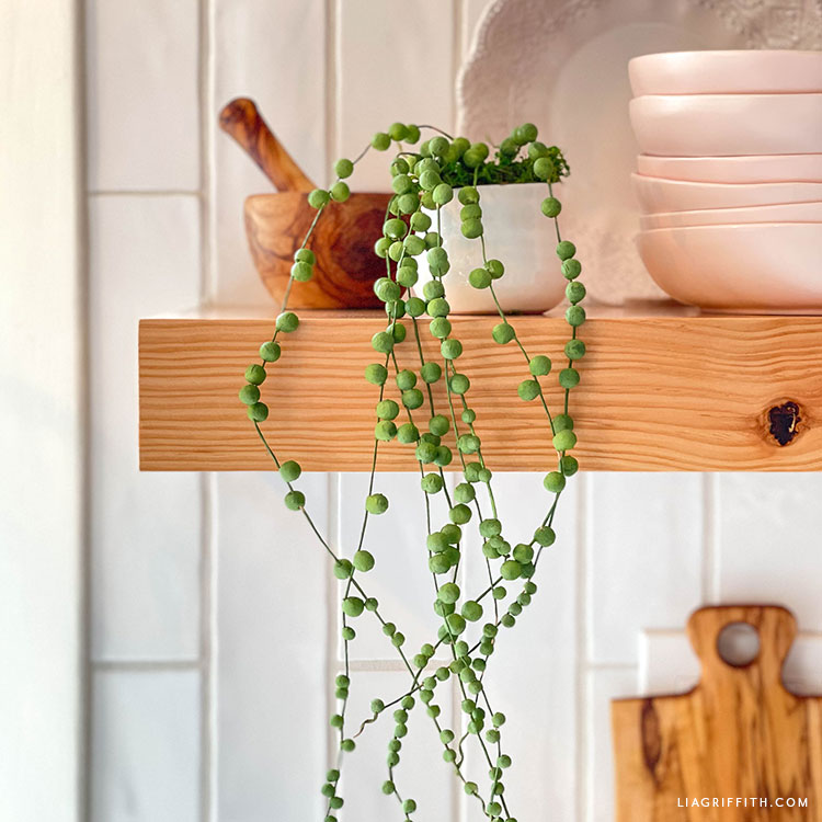 paper string of pearls trailing plant