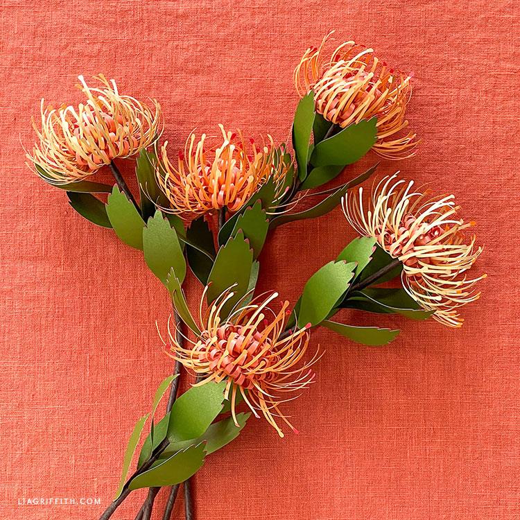 paper pincushion protea