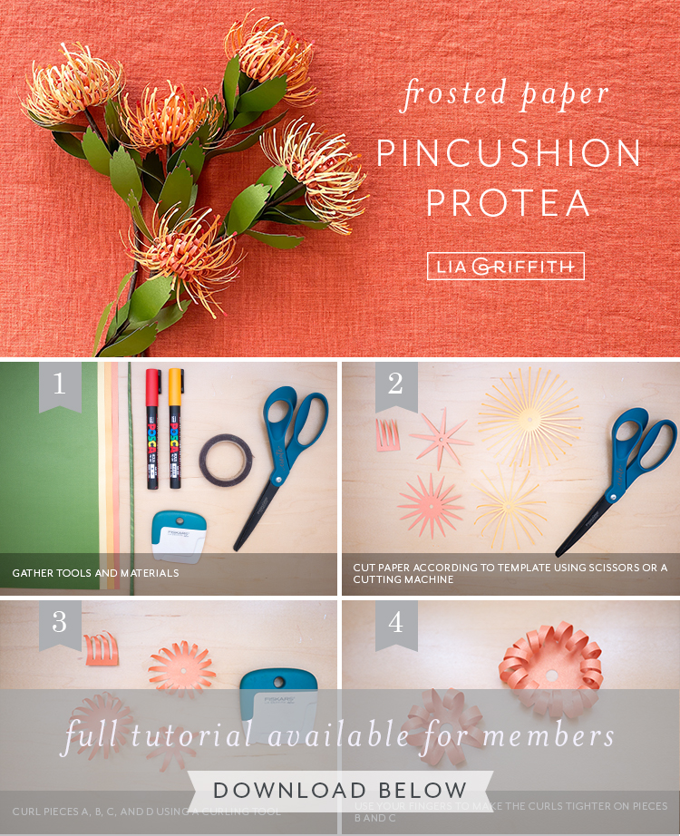 Photo tutorial for frosted paper pincushion protea by Lia Griffith