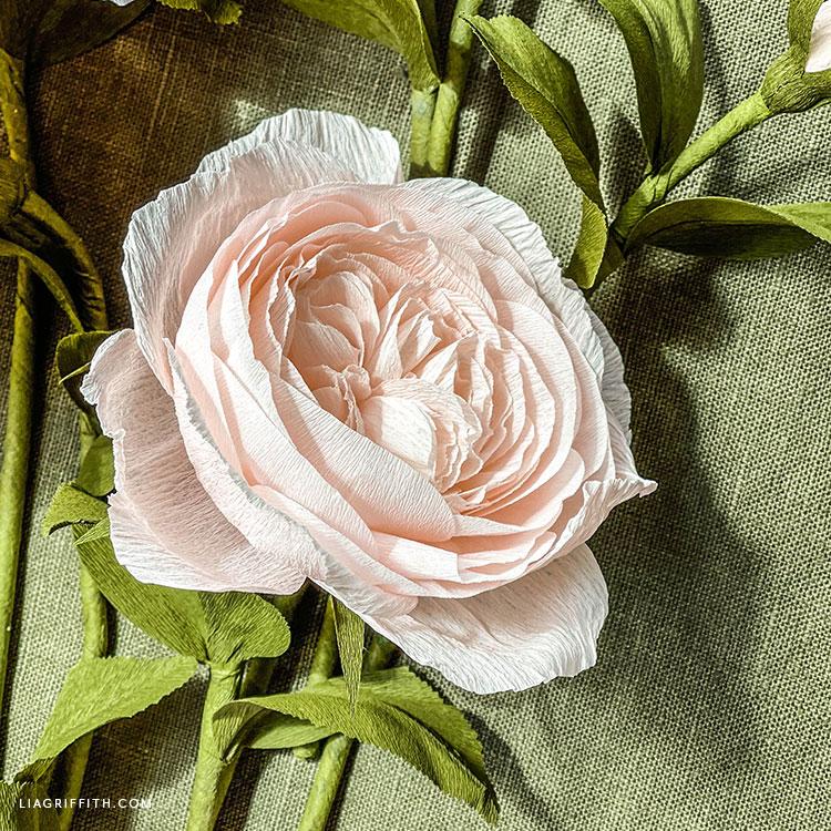 crepe paper Juliet rose