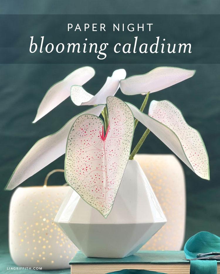 paper night blooming caladium