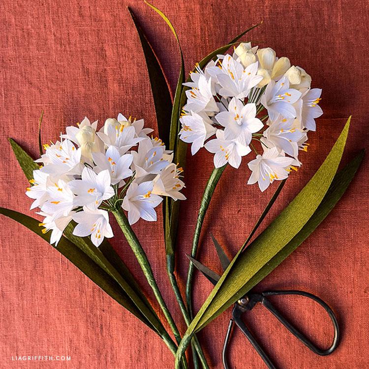 handmade crepe paper agapanthus