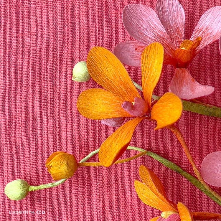 orange and pink crepe paper mokara orchid
