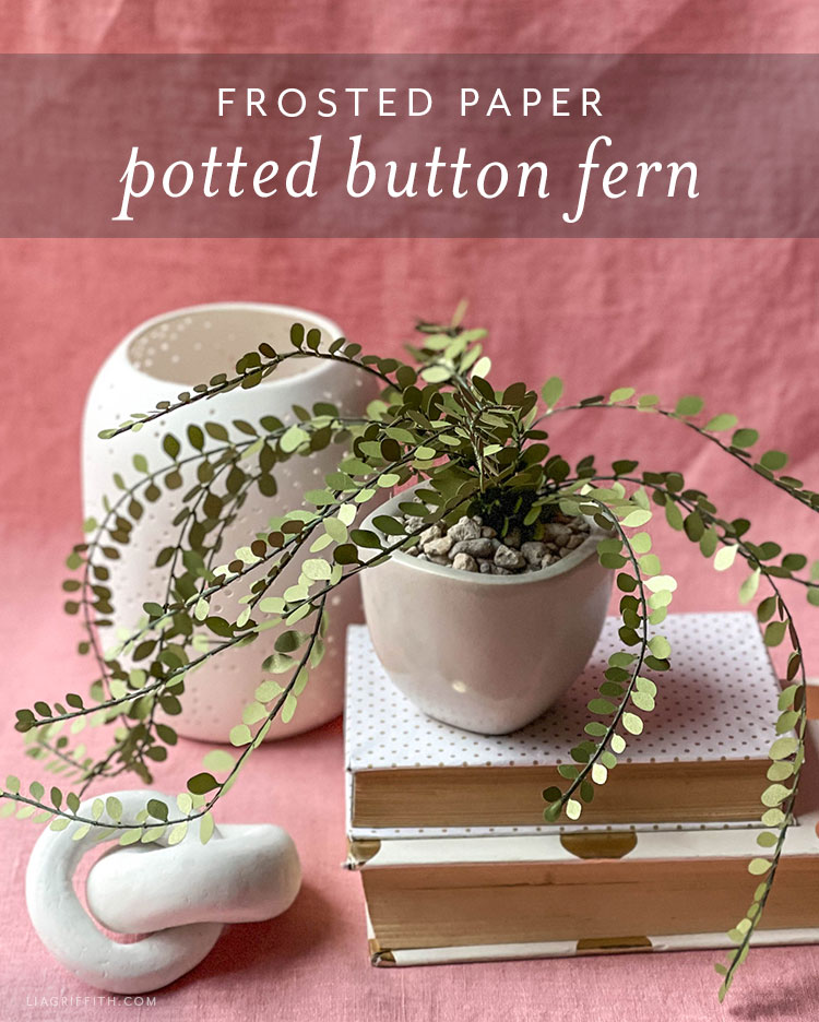 frosted paper potted button fern