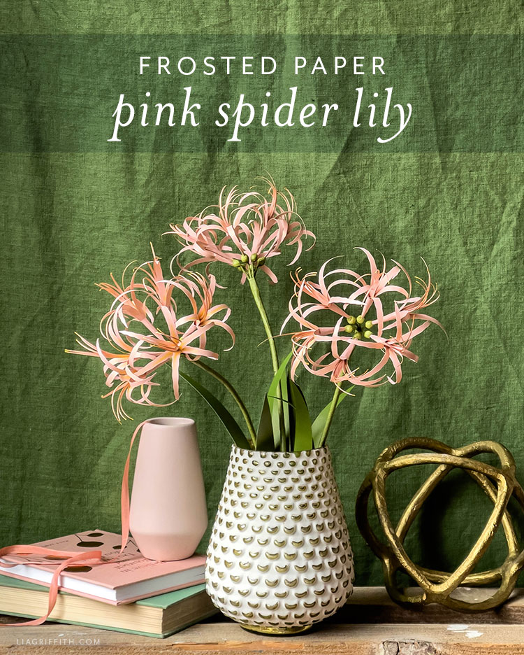 frosted paper pink spider lily
