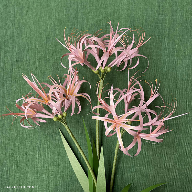 frosted paper spider lilies
